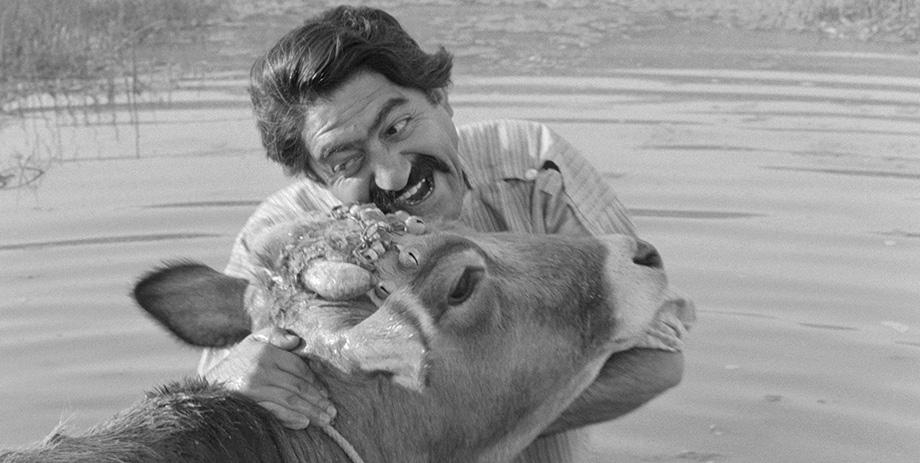 The Cow by Dariush Mehrjui