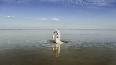 Photo of مرگ مشکوک ۷۰۰۰ پرنده مهاجر